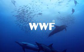 Zee s'engage pour la protection des océans avec les Creative Awards