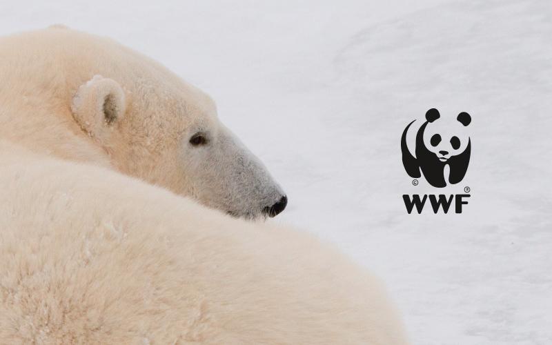 Consommer responsable grâce à WWF et Zee Agency